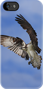 iPhone Case - Osprey by Jim Cumming