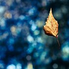Leaf fall by David Herreman