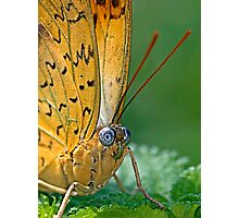 Julia Butterfly Photographic Print