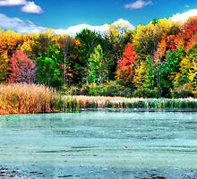 Fall Colors  by Marcia Rubin