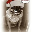 Pug Christmas Blah Blah Blah by Jonice