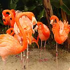 Caribbean Flamingo by PaulineHoward