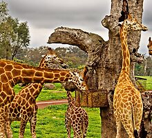 Giraffic Park by TonyCrehan