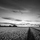 Bejewelled Sky BW by Andy Freer