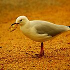 seagull on golden sand by andre joceline