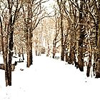 The Cold Road by tutulele