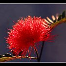 Bottle Brush by J.N. SINGH