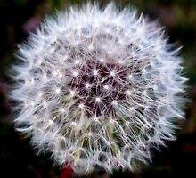 Make A Wish by Jill Holliday