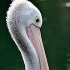 Pelican Bill by Deborah Clearwater