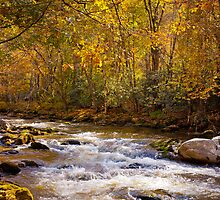 Fall Splendor in the Smokies by photosbyflood