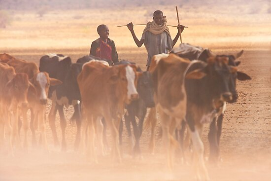 Masai herding cows, Kenya. Africa Calendar. by photosecosse /barbara jones