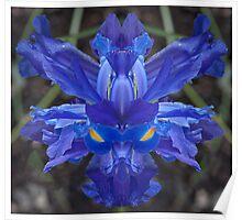 Iris # 459 Poster