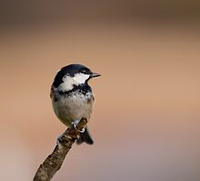 Coal tit by M.S. Photography/Art