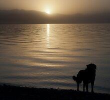 Family dog by fotovivencias