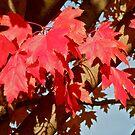 Autumn in Washington.. by RichImage