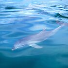 Bottlenose Dolphin by Ian Berry