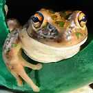 Western Banjo Frog by Eve Parry