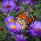 Butterfly Landing by John Hartung