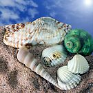  Shells on the sand by enrico01