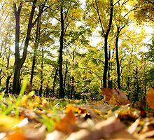 Autumn Presence in Poland by Kutor