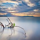 Fate of a Lone Mangrove by PhotoByTrace