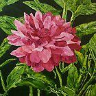 Bloom by Allan P Friedlander