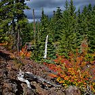 Fall In The McKenzie Lava Beds by Charles &amp; Patricia   Harkins ~ Picture Oregon