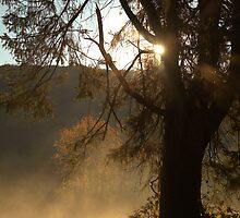 Morning Has Broken by Karol Livote