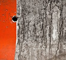 Orange, Concrete, Hole by Susana Weber