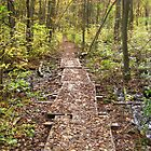 Woodland Boardwalk by P.M. Franzen