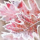 First Frost by Beth Mason