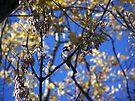 Bird Collection 001 by Greg Belfrage