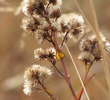 Autumn Asters by Kathi Arnell