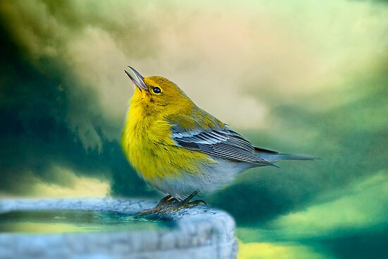 Sweet Little Warbler by Bonnie T.  Barry