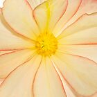 Yellow Flower by Phill Danze