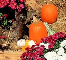 Fall's Colorful Bounty by Betty Northcutt