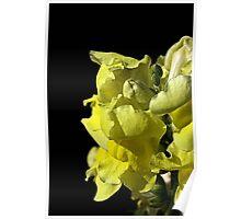 Snapdragon - Yellow Poster
