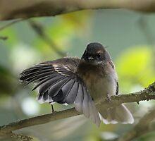 Spreading my wings... by Denzil