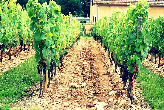 A French Vineyard by TallulahMoody