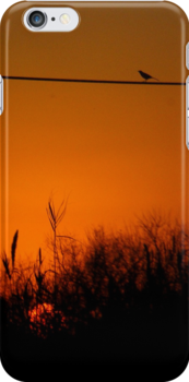 Morning Bird iPhone Case by Denis Marsili - DDTK