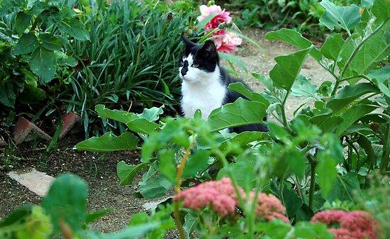 Da Goof in her garden by teresalynwillis