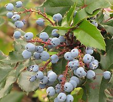 Oregon Grape by Kathi Arnell