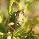 grasshopper up close by SusieG