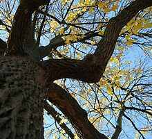Fall 2011, Old  by dge357