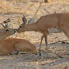 An antelope moment by Anthony Brewer