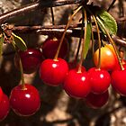 Cherries by Wealie