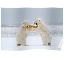 Rock 'Em, Sock 'Em Polar Bears Poster