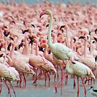 Flamingo iphone cover by Brad Francis