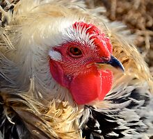 One Tough Chick by Ainsley Kellar Creations