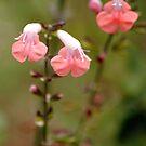 Flowers 2 by Robin Lee